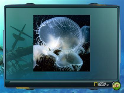 Nat Geo Adventure: Ghost Fleet