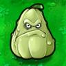 Squash Plant Guide
