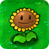 Sunflower Plant Guide