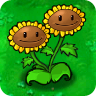 Twin Sunflower Plant Guide
