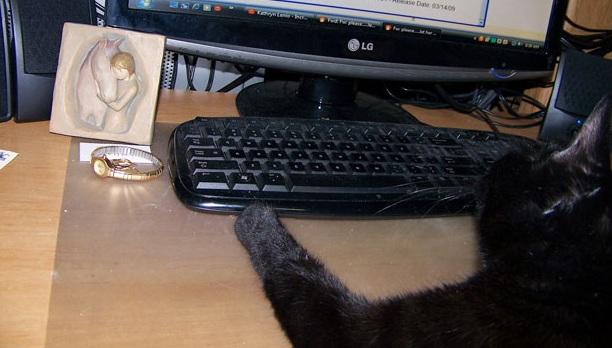 Keyboard Kitty