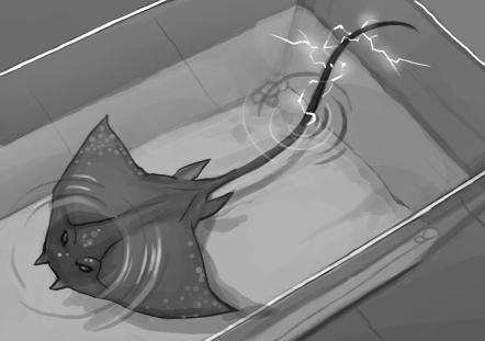 Ray Sketch